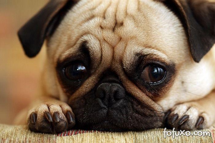 Casal é indenizado após morte do cachorro em hospedagem para pets na serra gaúcha