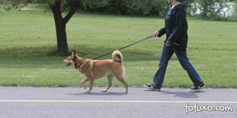 Dicas para deixar o passeio mais prazeroso para o seu cachorro