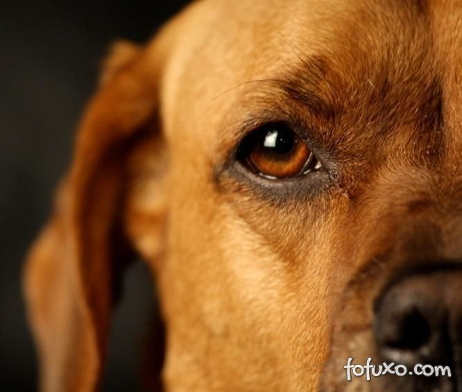 Saiba mais sobre terçol em cães