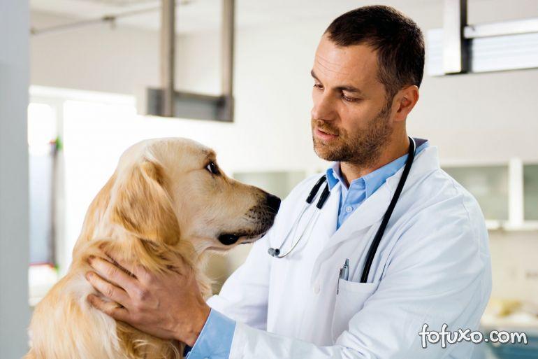 Conheça 4 erros comuns que cometemos com cães de estimação