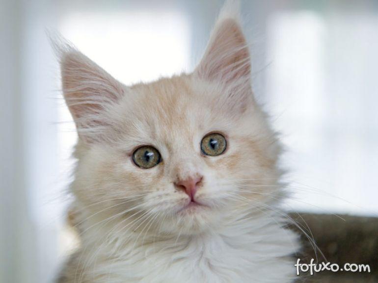 Lições para criar um gato mais feliz