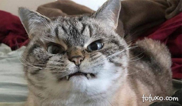 5 Coisas que você pensa que o seu gato gosta, mas não gosta!
