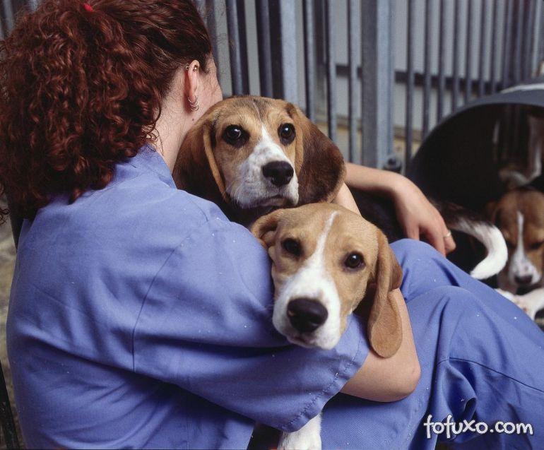 Projeto na web mostra principais doenças por raça de cachorro