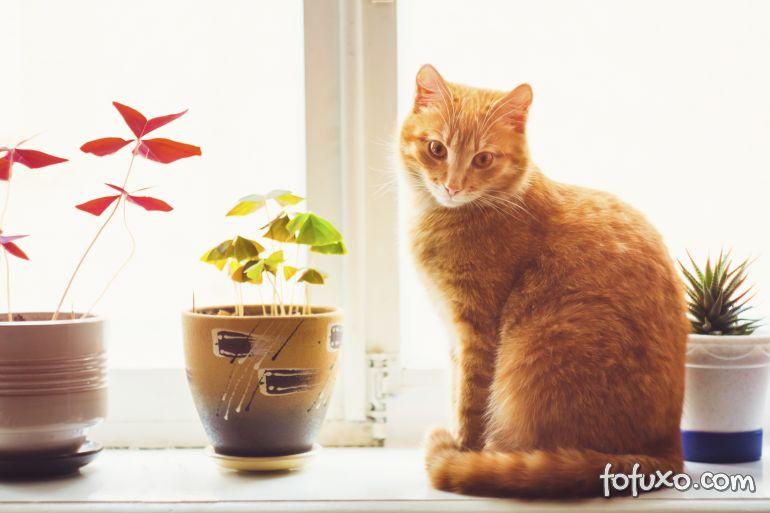 Dicas para criar gatos em apartamentos se sofrer