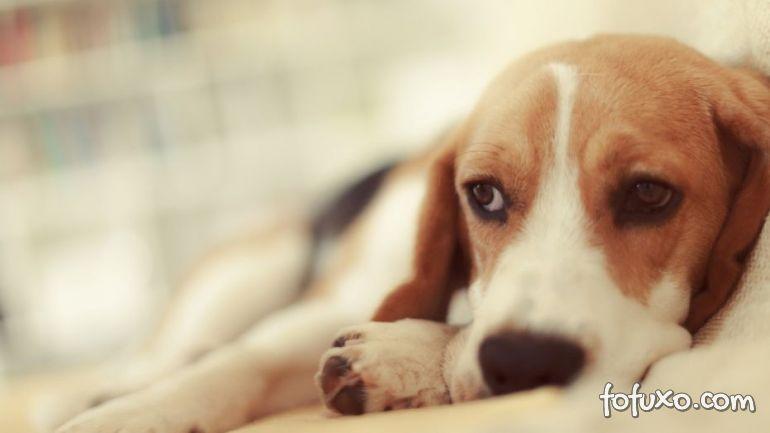 Confira uma receita de caldo caseiro para cachorros debilitados