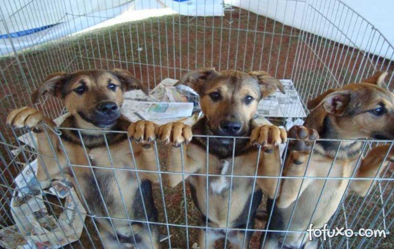 MT aprova lei que proíbe extermínio de cães e gatos