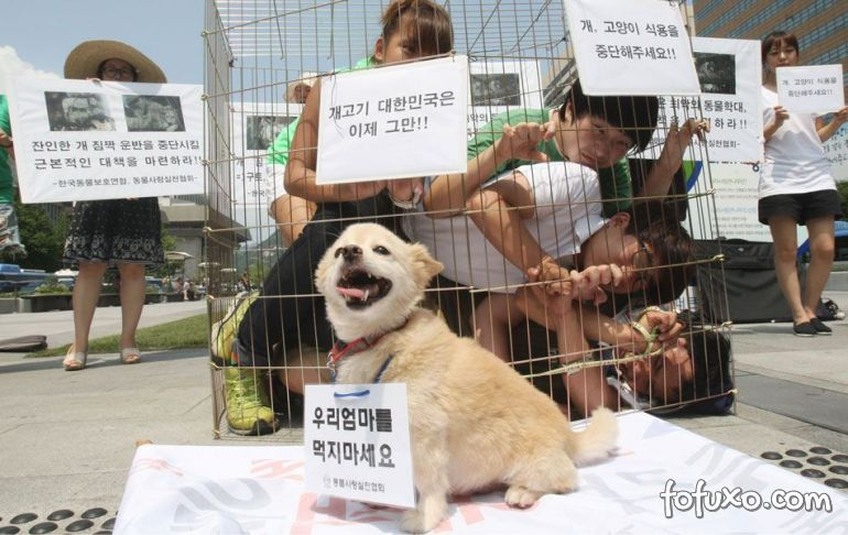 Manifestantes se unem para impedir consumo de carne de cachorro em Seul