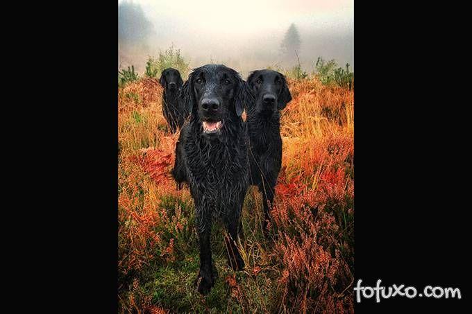 Confira as melhores fotos de cachorro em 2018