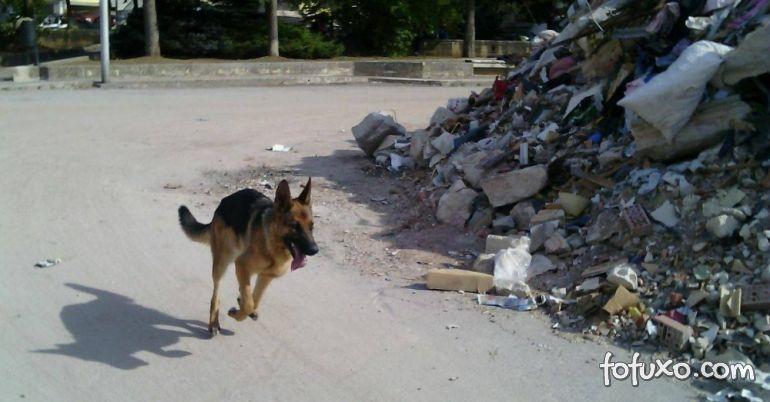 Cão que ajudou no resgate de vítimas de terremoto é encontrado morto