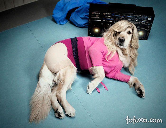 Cachorro imita fotos de Madonna 2