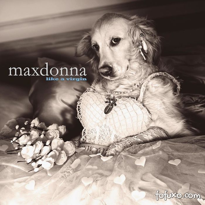 Cachorro imita fotos de Madonna 3