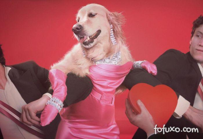 Cachorro imita fotos de Madonna 4
