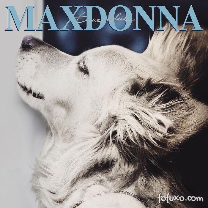 Cachorro imita fotos de Madonna 5