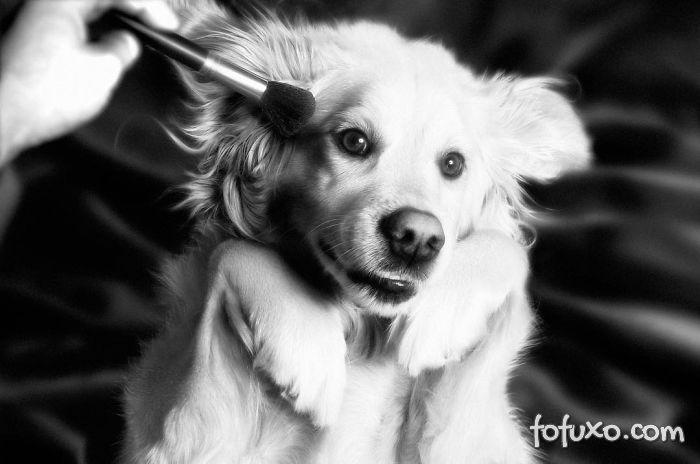 Cachorro imita fotos de Madonna 6
