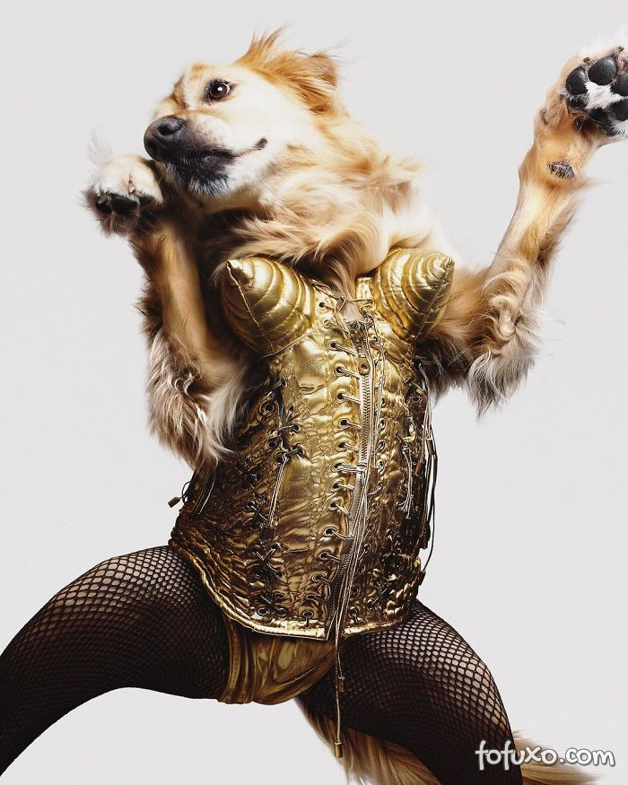 Cachorro imita fotos de Madonna 9