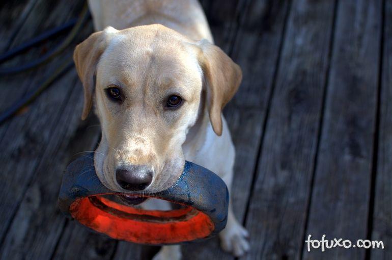 Pesquisas comprovam que cachorros se preocupam com donos tristes