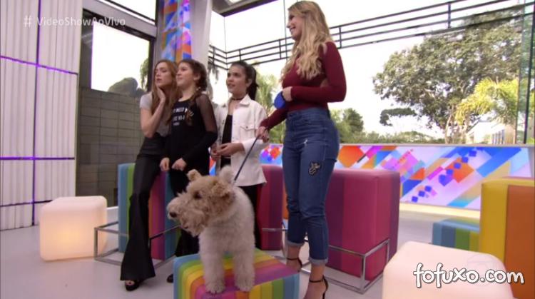 Globo utilizaria anestesia em cachorro para gravar novela