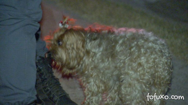 Cachorro alerta idosa e salva de incêndio residencial
