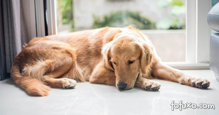Saiba como prevenir e tratar a bicheira nos cães