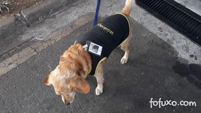 Cachorro perdido vira segurança de shopping