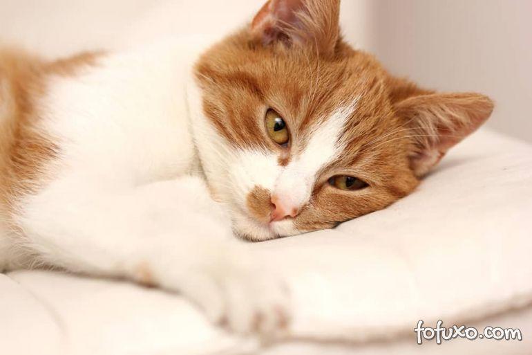 Conheça os sintomas da Síndrome Urológica Felina