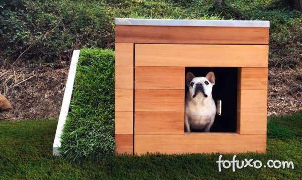 Empresa desenvolve casa de luxo e sustentável para cachorros
