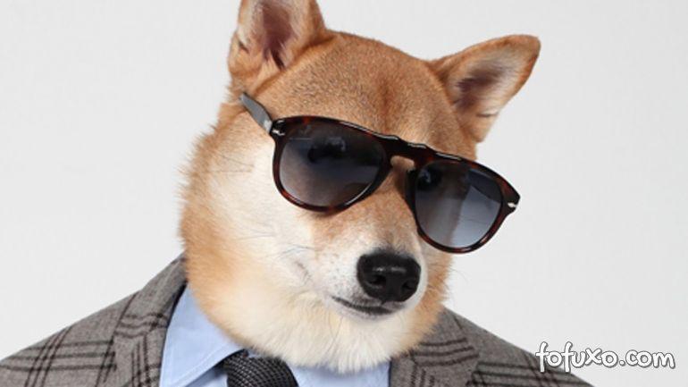 Cachorro 'estiloso' faz sucesso nas redes sociais