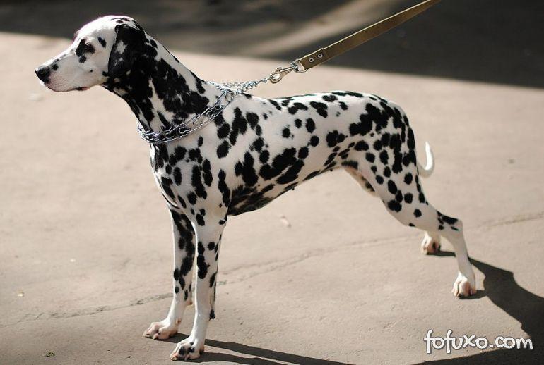 Confira os perigos da coleira enforcadora para os cães