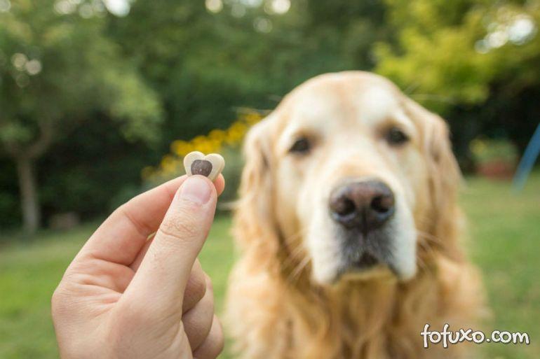 Dicas para usar o reforço positivo no adestramento de cães