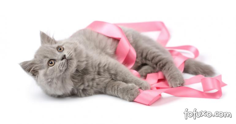 """Saiba como fazer """"autoexames"""" de câncer em cães e gatos"""