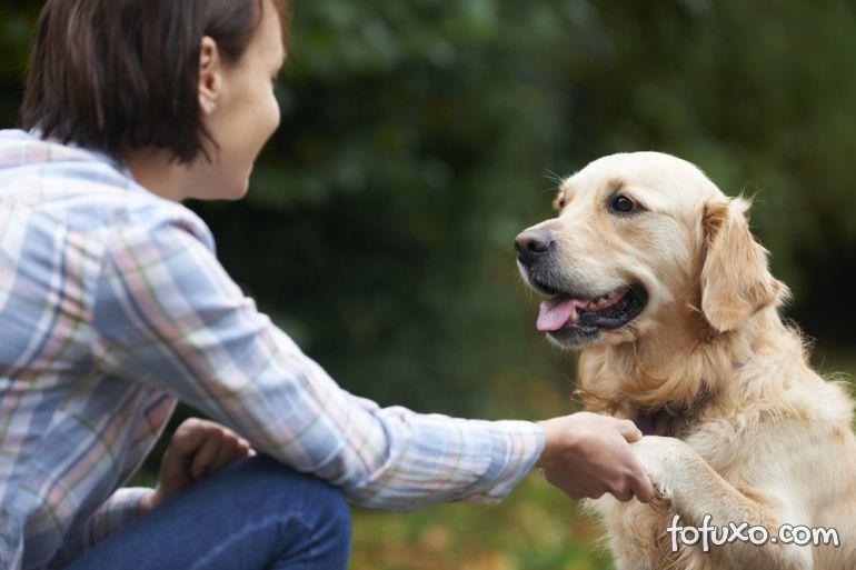 Nova pesquisa reforça: Cães entendem o que os humanos falam