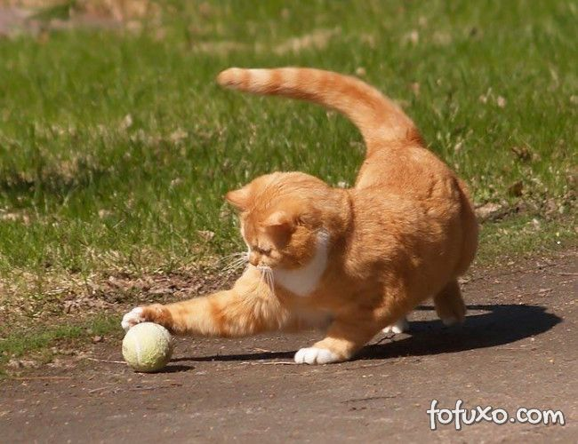 Dicas de atividades para gatos manterem a forma