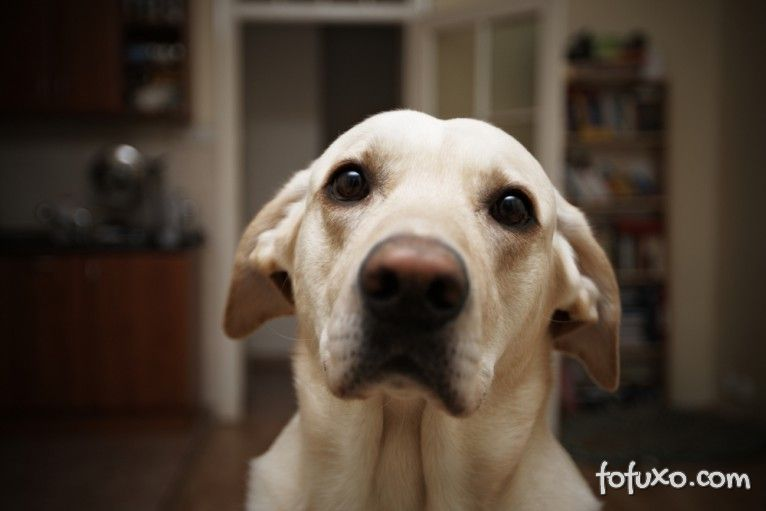 Estudo afirma que cachorros podem reconhecer pessoas mentirosas