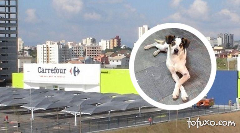 Morte de cachorro em loja de Carrefour gera revolta