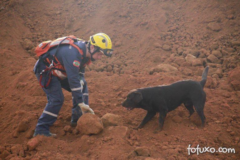 Cães ajudam nas buscas por vítimas em Brumadinho