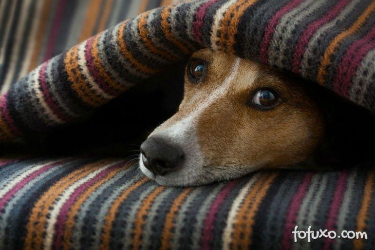 Confira alguns dos principais medos e fobias do cachorro