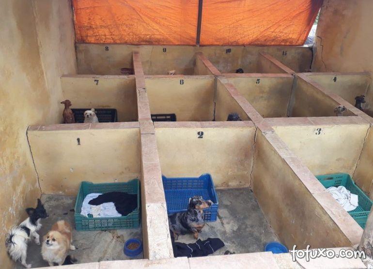 Canil é fechado depois de ser flagrado com 1,5 mil animais vítimas de maus-tratos
