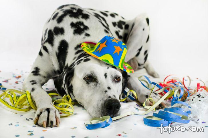 Dicas para quem quer levar o cachorro para o bloquinho de carnaval