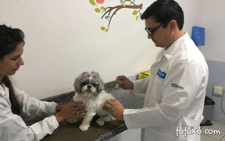 Goiânia pode ganhar hospital veterinário