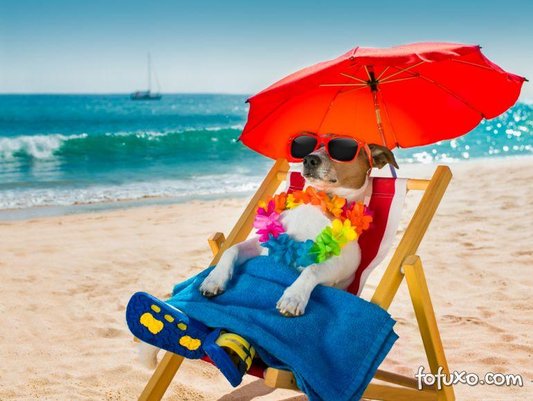 Dicas para retomar rotina dos cães depois das férias