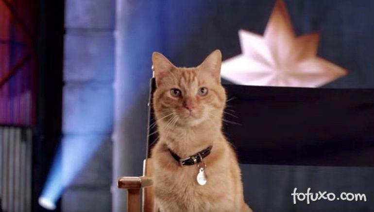Gatos utilizados no filme Capitã Marvel não gostavam dos inimigos
