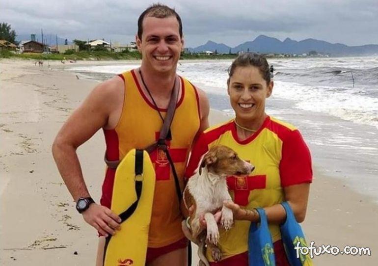 Guarda-vidas salvam cachorro em praia do Paraná