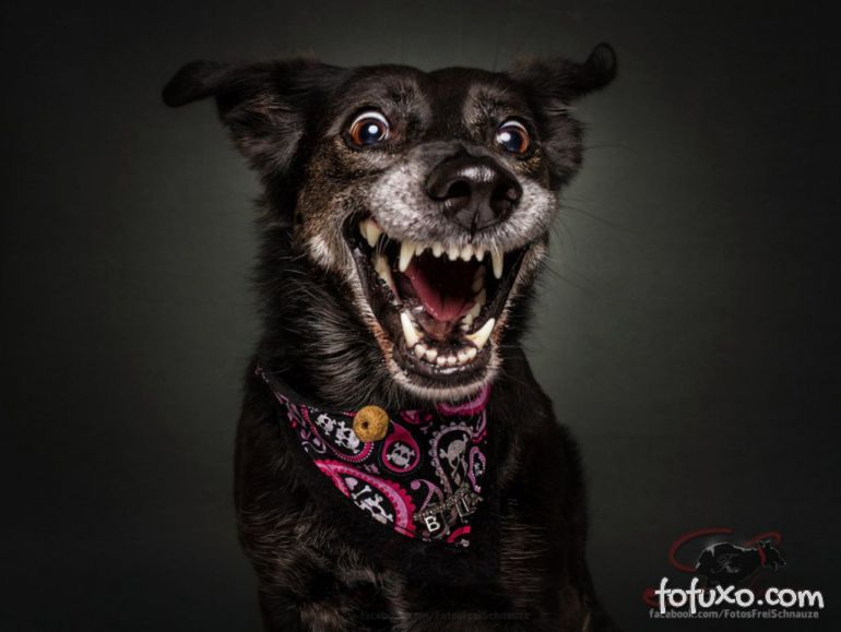 Fotógrafo registra fotos engraçadas de cães tentando pegar comida 1