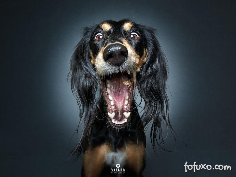 Fotógrafo registra fotos engraçadas de cães tentando pegar comida 3