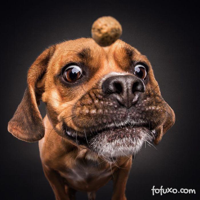 Fotógrafo registra fotos engraçadas de cães tentando pegar comida 4