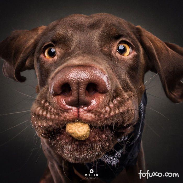 Fotógrafo registra fotos engraçadas de cães tentando pegar comida 5