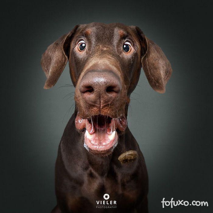 Fotógrafo registra fotos engraçadas de cães tentando pegar comida 6