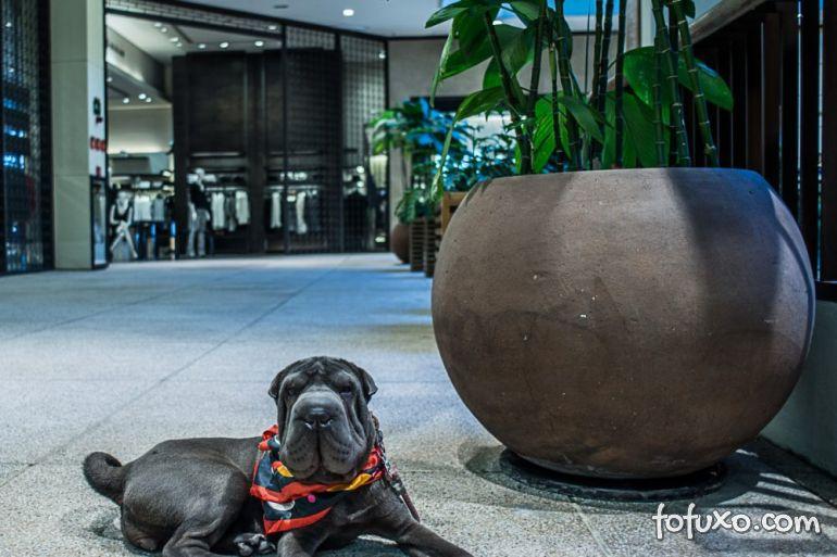 Shopping abre roda-gigante pet friendly em São Paulo