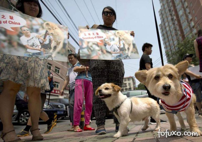 Artistas europeus protestam contra festival de carne de cachorro e gato na China