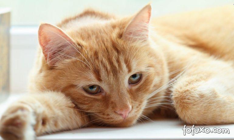 Gatos podem ficar doentes com poeira de casa